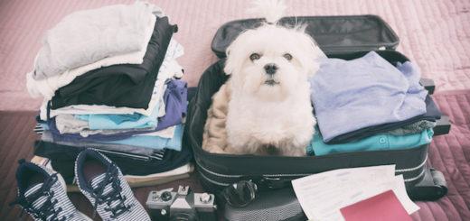 Cesta do zahraničí se psem