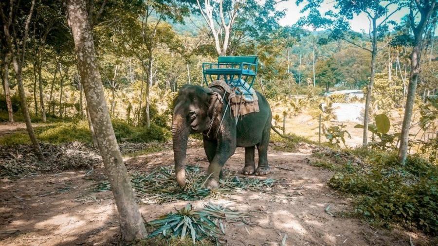 Jezdení na slonech
